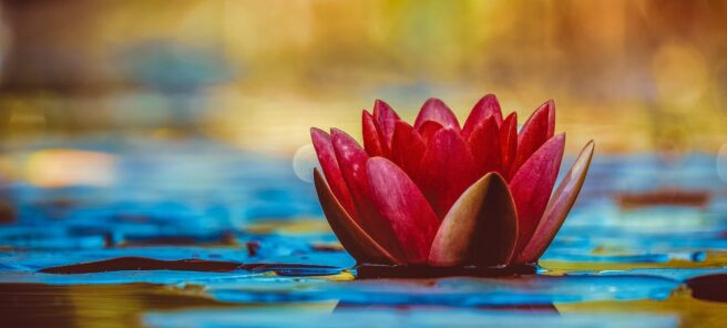 How can one person end misery through Nichiren Buddhism?