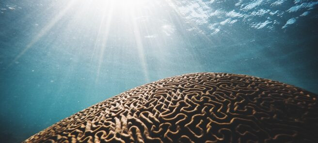 Coaching with a Neuroscience Approach
