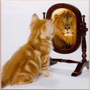 cat mirror lion